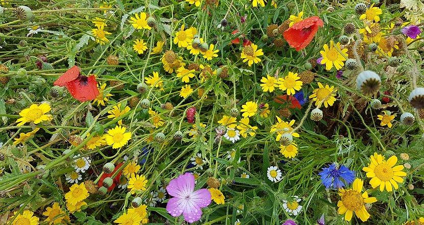 Farm_Blooms