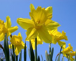St Davids Day Sale