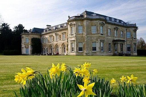 Daffodils & House