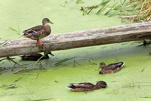 Lake Wildlife