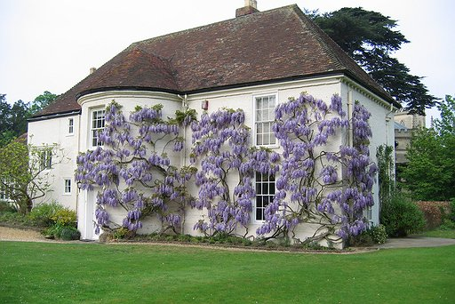 Hartwell - The Old Rectory - Wysteria in bloom
