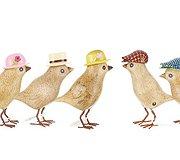 Dcuk - Garden Birds