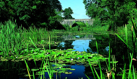 Bosherston Lily Ponds - Hidden gem