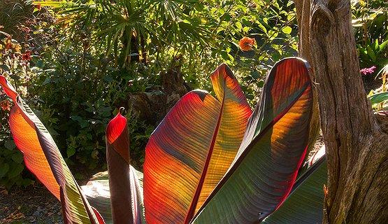 Picton Castle garden