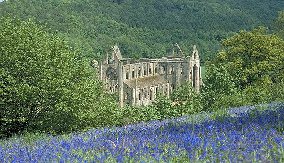 Tintern Abbey - Tintern Abbey in the spring