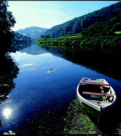 Get to Know WYE VALLEY